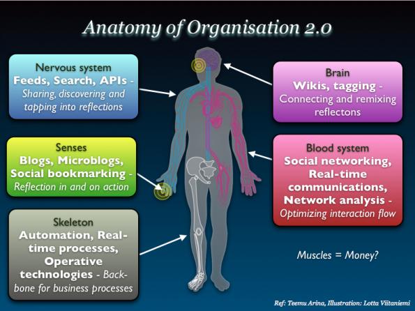 anatomy_organisation20